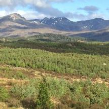 Restock site, Cougie Strathglass Glen Affric NNR result of ten years intensive deer control.